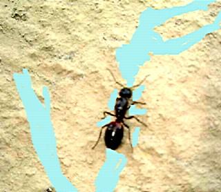 *play: 蟻に学ぶ